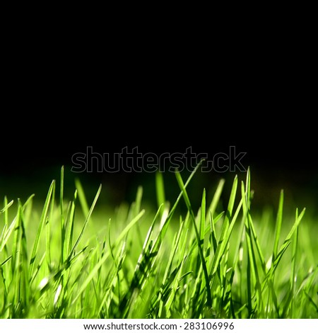 grass over black background, swallow depth of field - stock photo