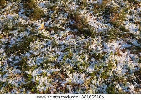 Grass peeking out through the first snow fall of winter
