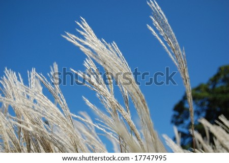 grass plant blowing - stock photo