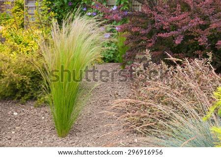 Grass plant set in a an arid garden - stock photo