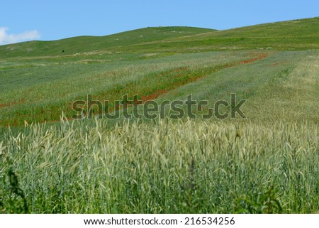 Grass plants in the field - stock photo