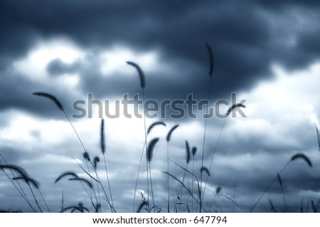 Grass Plumes in Front of Clouds, Silhouette