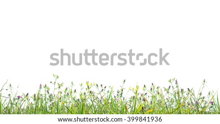 grass profile isolated - stock photo