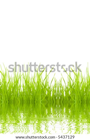 grass reflecting from a water isolated on a white background - stock photo