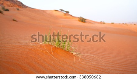 Grass Sand Dune  background. Beautiful sand background. Sand Dune texture blurred background. Sand background. - stock photo