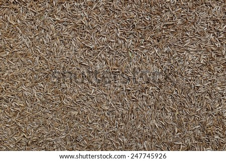 Grass seed as an abstract background texture - stock photo