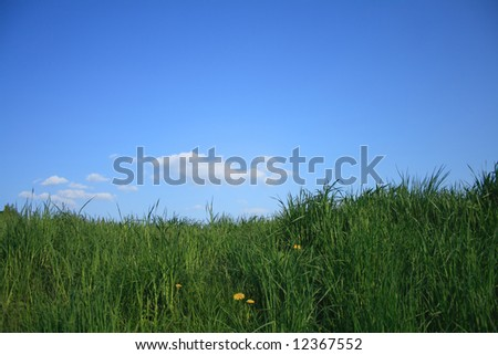 Grass sky and dandelions