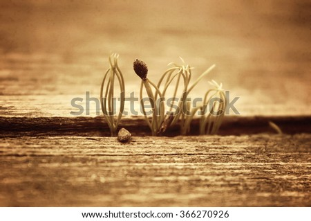 Grass sprouts breaking through wooden board. Vintage toning. Old grain texture. - stock photo