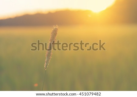 Grass straw with cropfield behind during sunset. Sweden - stock photo