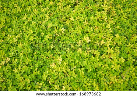 grass texture green new pattern - stock photo