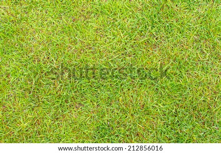 grass texture image for background usage. - stock photo