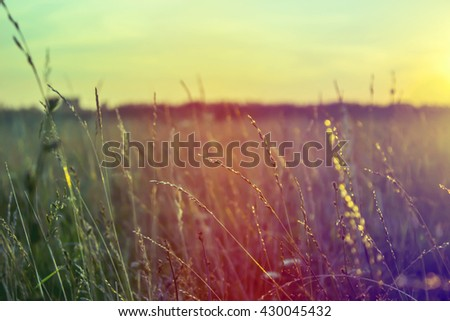 Grass when sunset with retro vintage filter - stock photo