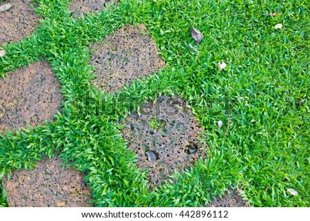 Grass with brick walkway  - stock photo