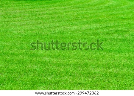 grass with deep of focus - stock photo
