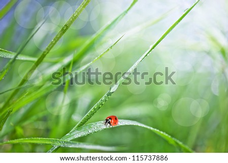 Grass with dew and ladybird - stock photo