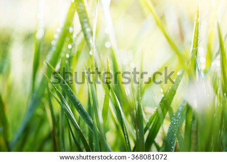 grass with drops of water, shallow depth of field - stock photo
