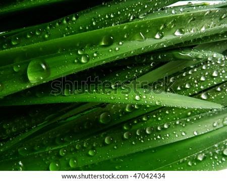 grass with rain drops macro - stock photo