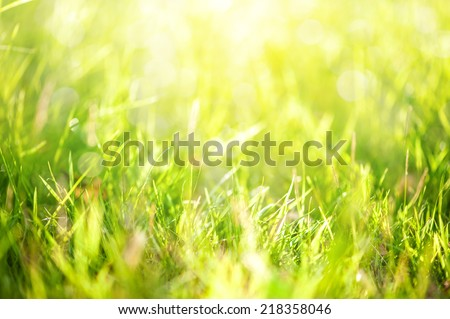 grass with sunlight in background - stock photo