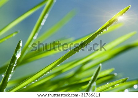 Grass with water drops - stock photo