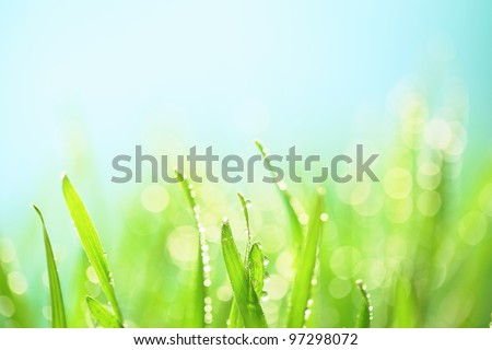 Grass with water drops,Closeup - stock photo