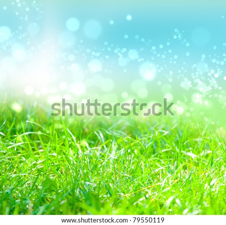 grass with water drops in the early morning - stock photo