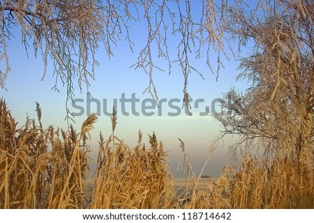 Grasses been cold at the field edge among trees at a cold winter morning - stock photo