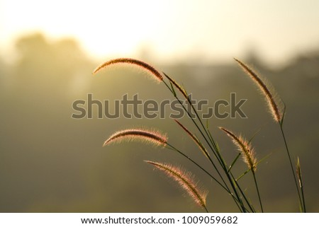 Grasses beside the road with beautiful sunrise background