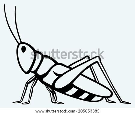 grasshopper image isolated on blue background stock illustration rh shutterstock com