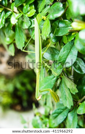 Grasshopper in the garden - stock photo