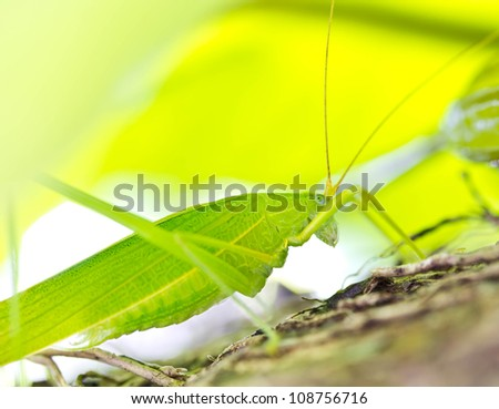 Grasshopper in the tropical rain forest. - stock photo