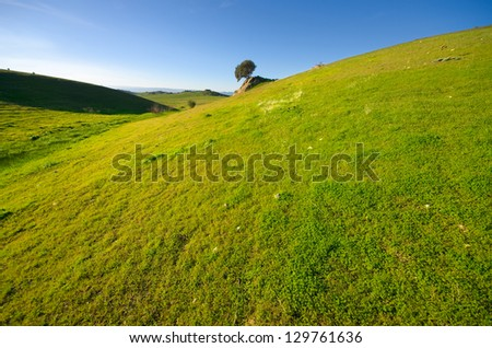 grassland and remote tree on background - stock photo