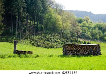 grassland and stored firewood on sunny edge  of  the  wood in Black Forest