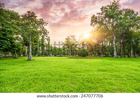 Grassland and trees in sunset - stock photo