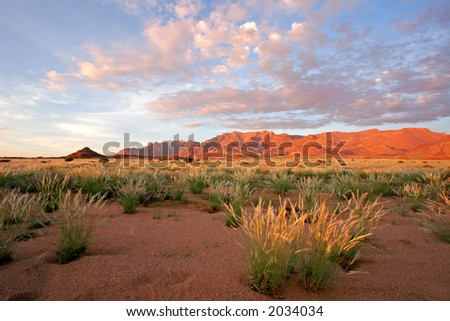 Grassland landscape at sunrise, Brandberg mountain, Namibia - stock photo