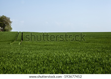 grassland on island rugen germany - stock photo