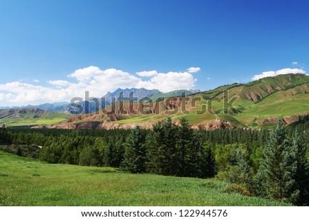Grassland, spruce woods besides Danxia landform - stock photo