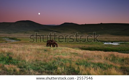 Grassland view with horses and moon