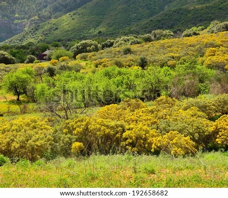Grassland with small cottage, trees and bushes in full spring, Gran canaria, Canary islands  - stock photo