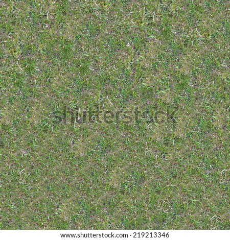 Grassplot with Green and Yellowed Grass. Seamless Tileable Texture. - stock photo