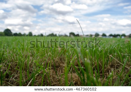 grassy green blades of field with cloud and sky