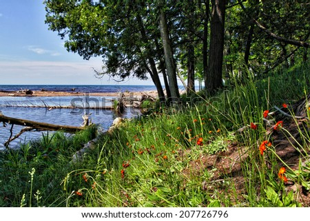 Grassy shore of Lake Superior with orange flowers. Porcupine Mountains State Park, Michigan. - stock photo