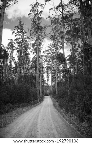Gravel road snakes its way through tall forest - stock photo