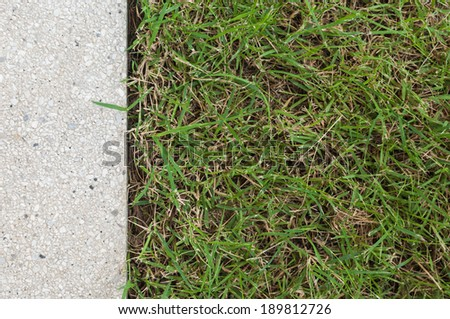 Gravel texture and grass for background - stock photo