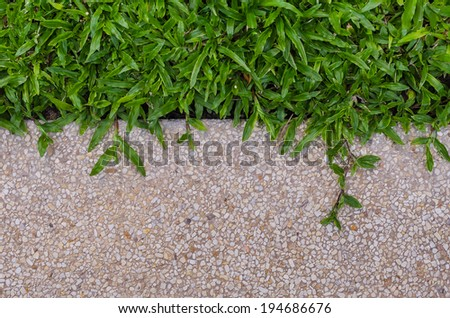 Gravel texture floor and grass for background - stock photo