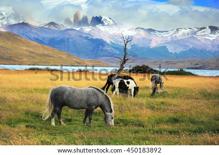 Gray and black horses grazing in a meadow near the lake. On the horizon, towering cliffs Torres del Paine - stock photo