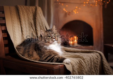 Gray and Black Tabby Cat Relaxing, cat lying on a chair - stock photo