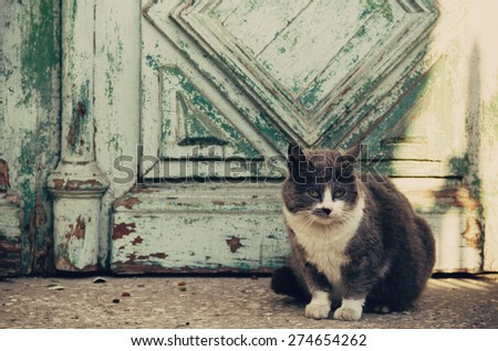 gray and white  cat at the old door - stock photo