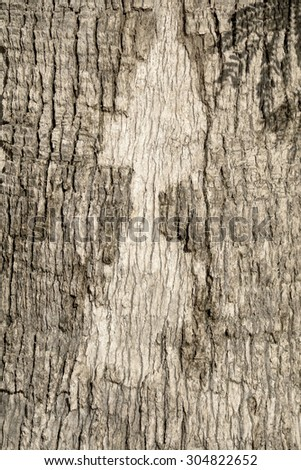 gray bark - stock photo