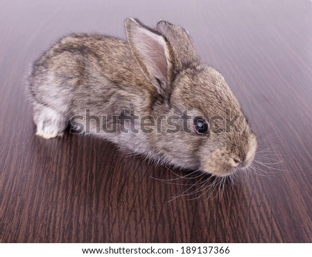 gray bunny sitting on a brown wooden surface