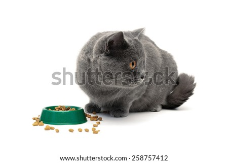 gray cat eating food from a bowl green on a white background. horizontal photo. - stock photo